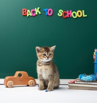 Gatinho fofo chinchila escocesa sentado em linha reta, fundo de quadro de giz verde e papelaria, volta às aulas