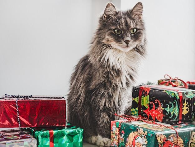Gatinho fofo com caixas de presente