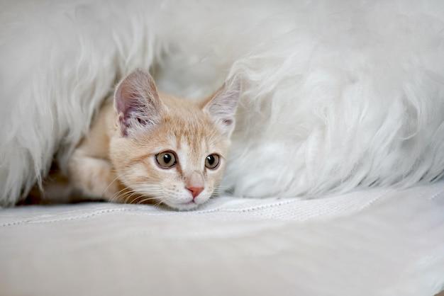 Gatinho fofo com medo está brincando de esconde-esconde na cama em um cobertor. gatinho a espreitar para fora do esconderijo