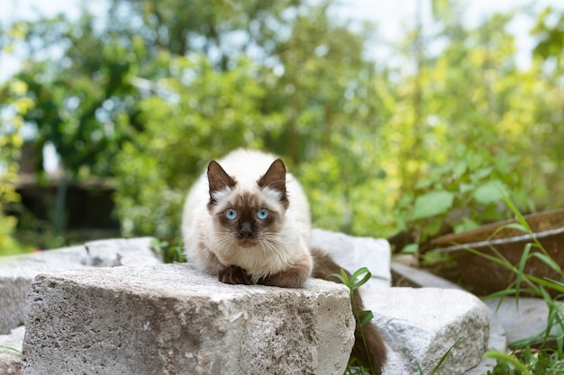 Gatinho fofo com olhos azuis, senta-se na grama verde