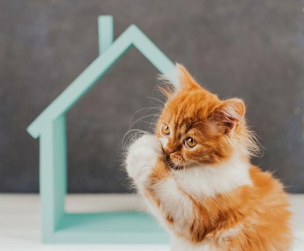 Gatinho fofo de gengibre em um fundo de casa azul. gatinho engraçado levantou as patas.