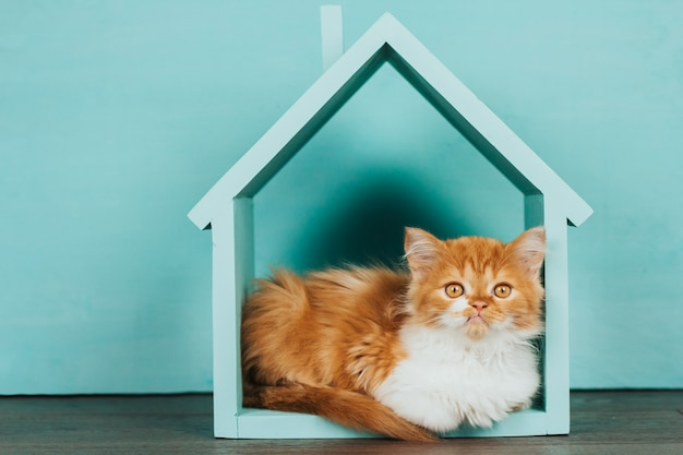 Gatinho fofo de gengibre em uma casa de madeira azul sobre um fundo azul.