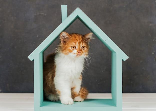 Gatinho fofo de gengibre está sentado em uma casa de madeira azul.