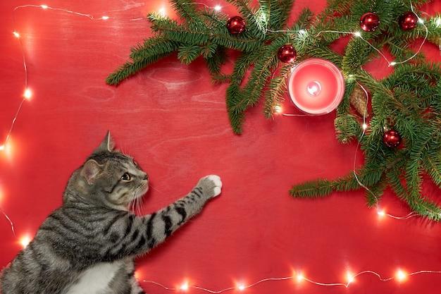 Gatinho fofo deitado e olhando para a árvore de natal com luzes e bolas vermelhas