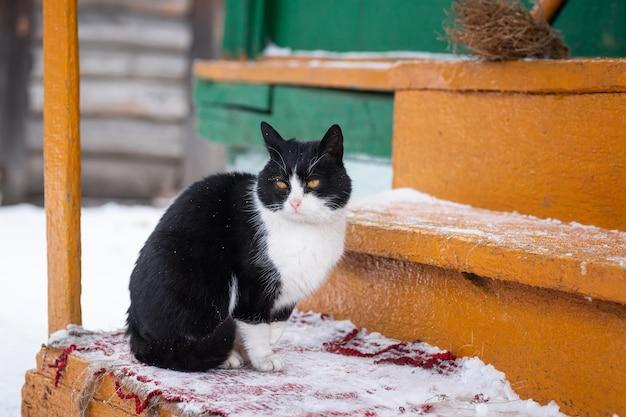 Gatinho fofo e brilhante sentado na neve e olhando para a frente no inverno