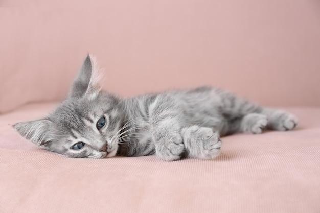 Gatinho fofo e cinza deitado no sofá