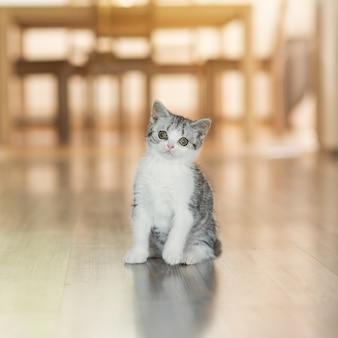 Gatinho fofo e cinza em casa aconchegante Foto Premium