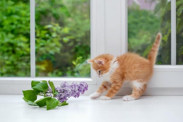 Gatinho fofo e fofo com um ramo de lilás