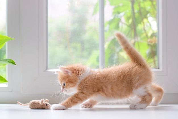 Gatinho fofo e fofo e vermelho brincando com um rato de brinquedo no parapeito da janela