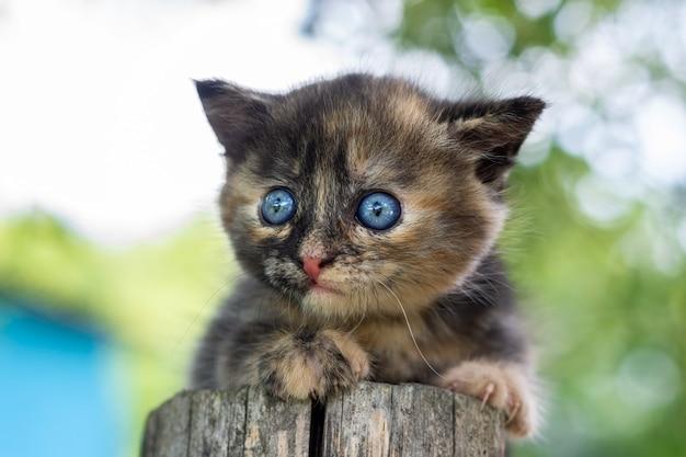 Gatinho fofo fofo cinza na grama verde num dia de verão. retrato de um gatinho na natureza.