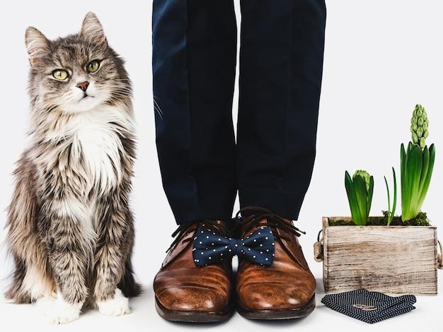 Gatinho fofo, gerente de escritório e sapatos elegantes
