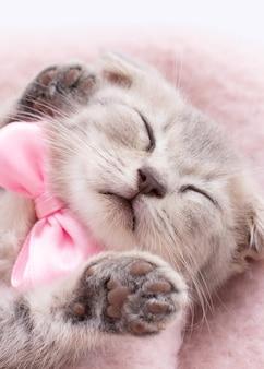 Gatinho gatinho adormecido numa cesta de vime
