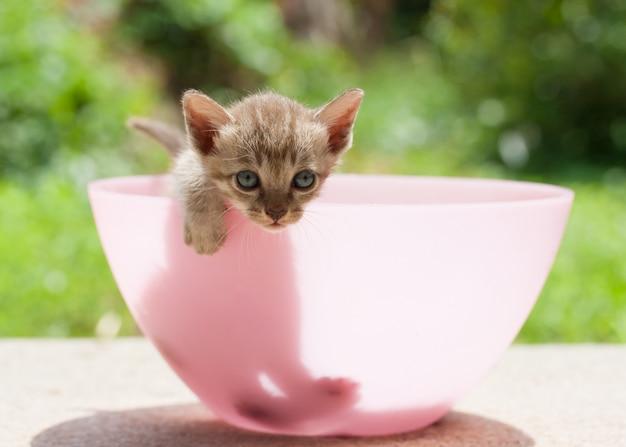 Gatinho gato bonito