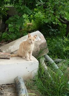 Gatinho gengibre ao ar livre sentado em blocos obsoletos retrato de um gato de rua listrado vermelho e solitário com destino difícil e arranhões no focinho.