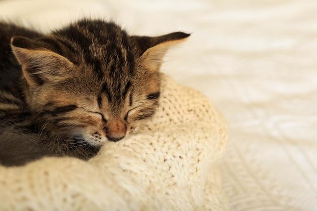 Gatinho listrado malhado dormindo enrolar no cobertor branco fofo. lindo gatinho fofo fofo cinza. gato, bebê animal, gatinho encontra-se na manta branca.