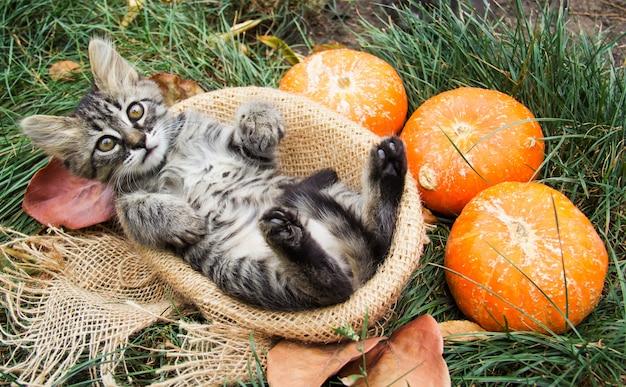 Gatinho listrado na cesta. gatinho com abóboras. gato de outono
