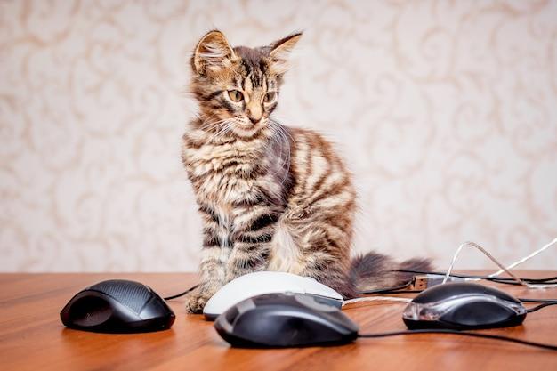 Gatinho listrado pequeno perto de ratos de computador. muito trabalho no escritório.