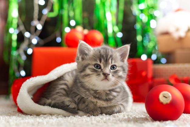 Gatinho malhado engraçado encontra-se no tapete ao lado da árvore de natal, decoração em casa no tapete.