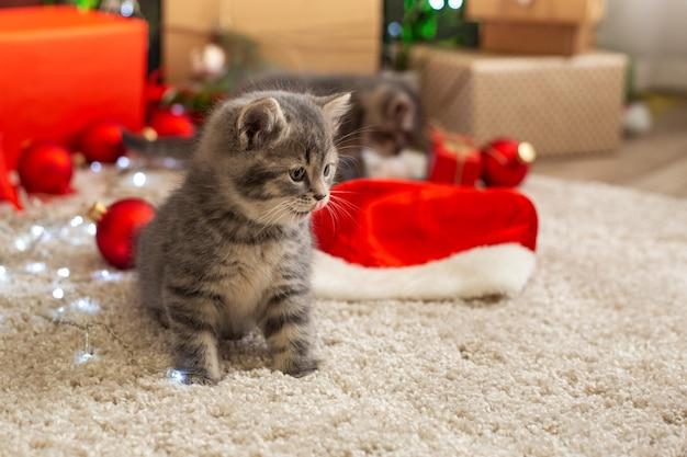 Gatinho malhado engraçado lamber-se ao lado da decoração festiva de natal em casa no tapete.