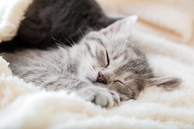 Gatinho malhado fofo dorme no cobertor macio branco. gatos descansam cochilando na cama. amor e amizade felinos. animais de estimação confortáveis dormem em uma casa aconchegante.