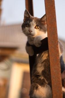Gatinho malhado na escada na cerca