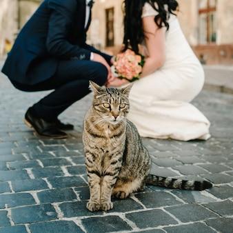 Gatinho na frente de um noivo e uma noiva na rua. casal de noivos e gato ao ar livre.