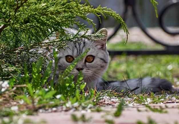 Gatinho nos arbustos.