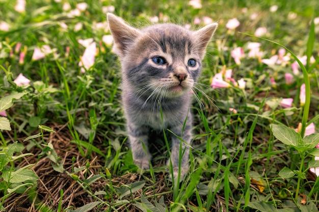 Gatinho pequeno bonito com olhos azuis senta-se entre a grama verde jovem