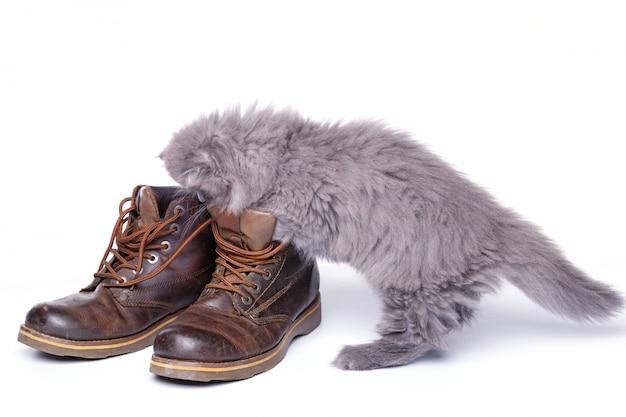 Gatinho pequeno bonito e botas de couro