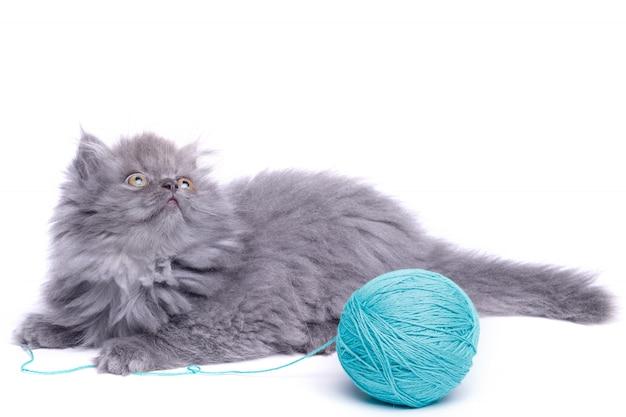 Gatinho pequeno bonito e novelo de lã