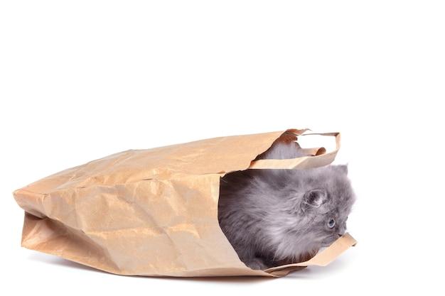 Gatinho pequeno bonito e saco de papel