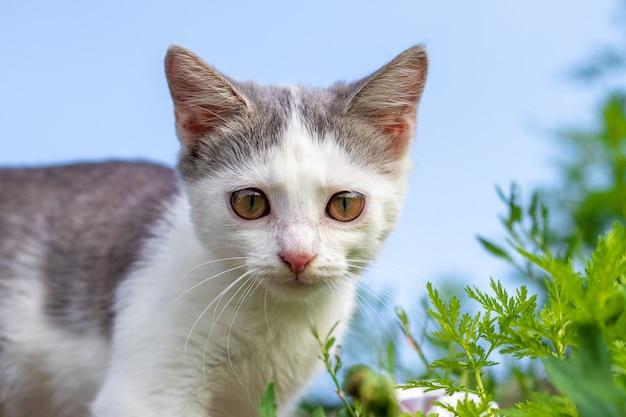 Gatinho pequeno com olhos grandes em um fundo de céu entre a vegetação