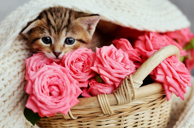 Gatinho pequeno na cesta com rosas cor-de-rosa.