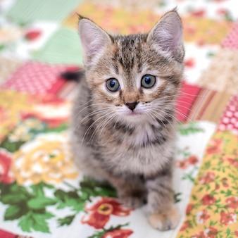 Gatinho pequeno no cobertor colorido