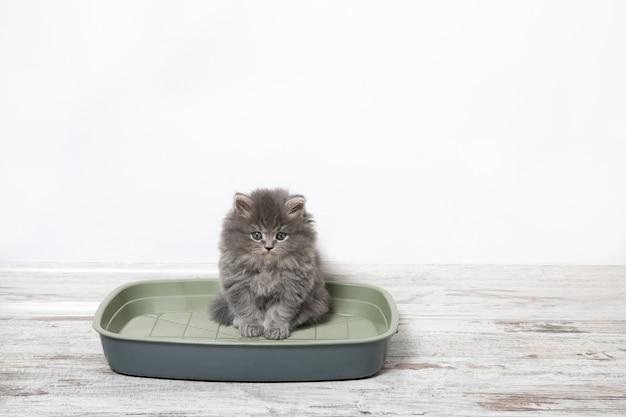 Gatinho pequeno no gato de lixo plástico no chão