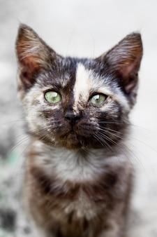 Gatinho preto com uma tira na testa olha para a câmera, foco seletivo. animais de estimação adoráveis.