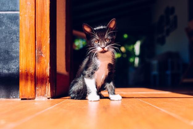 Gatinho preto que descansa no sol no assoalho da casa.