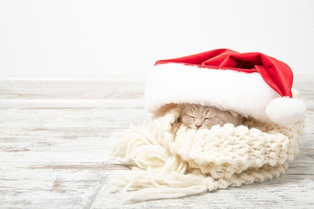 Gatinho ruivo dorme em um chapéu de natal