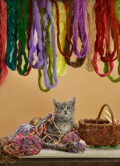 Gatinho sentado na cesta com novelo de lã