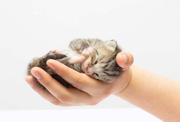Gatinho sentado na palma da mão. isolado em fundo branco