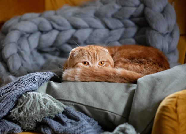 Gatinho sentado na poltrona em casa