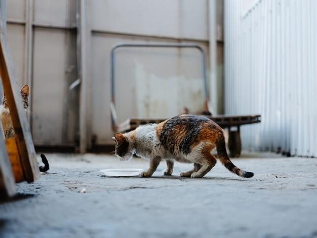 Gatinho sujo comendo de um prato na rua em um quarto abandonado