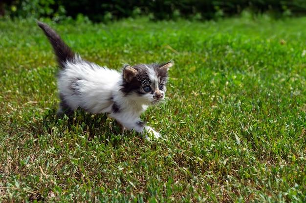 Gatinho vadio brincando na grama
