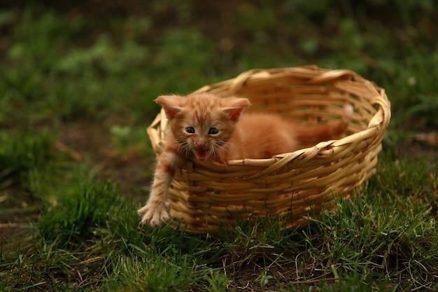 Gatinho vermelho em uma cesta de vime na rua entre a grama.