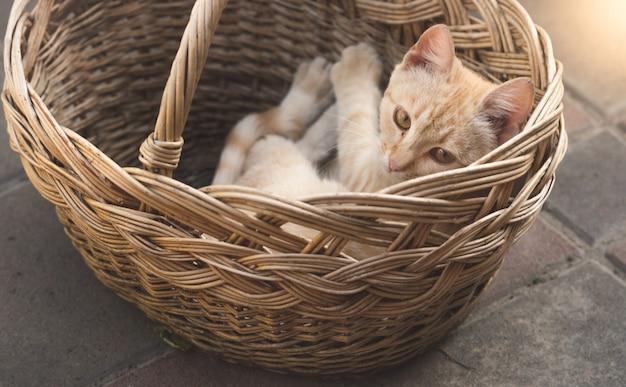 Gatinho vermelho fofo deitado na cesta