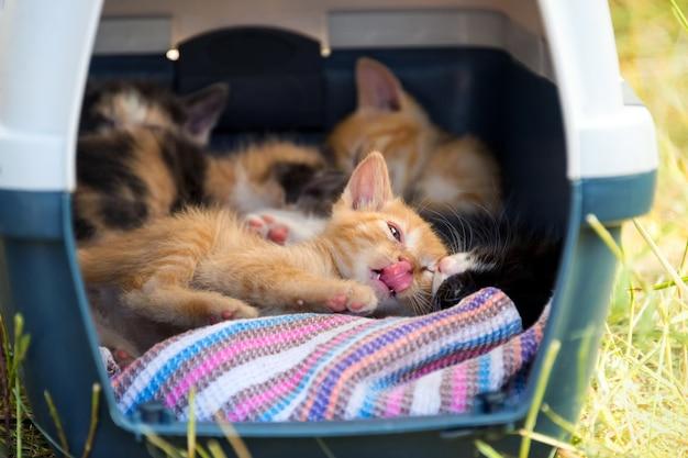 Gatinhos brincando em uma cesta portátil entre a grama