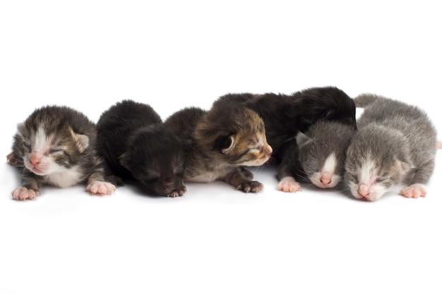 Gatinhos cegos em branco
