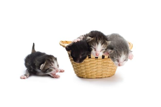 Gatinhos cegos em uma cesta.