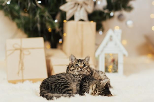 Gatinhos com árvore de natal