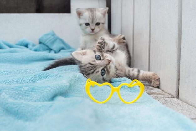 Gatinhos listrados cinza sobre um fundo claro com óculos amarelos.